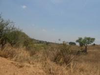 Uganda is pretty but not nearly as green as Rwanda