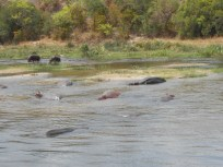 The most dangerous animal in all of Africa...a Hungry Hungry Hippo!