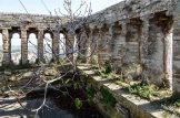 Foto della pianta di fico nata sul muro del terrazzetto, sopra alla cella campanaria della torre civica. Foto Sergio Ceccotti.