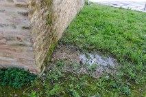 Acqua pluviale che ristagna nell'aiuola della porta. Foto di Sergio Ceccotti.