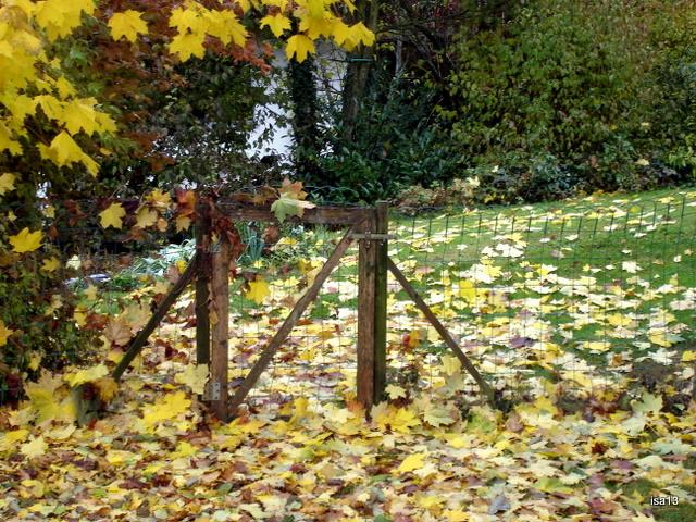 jardin, novembre 09