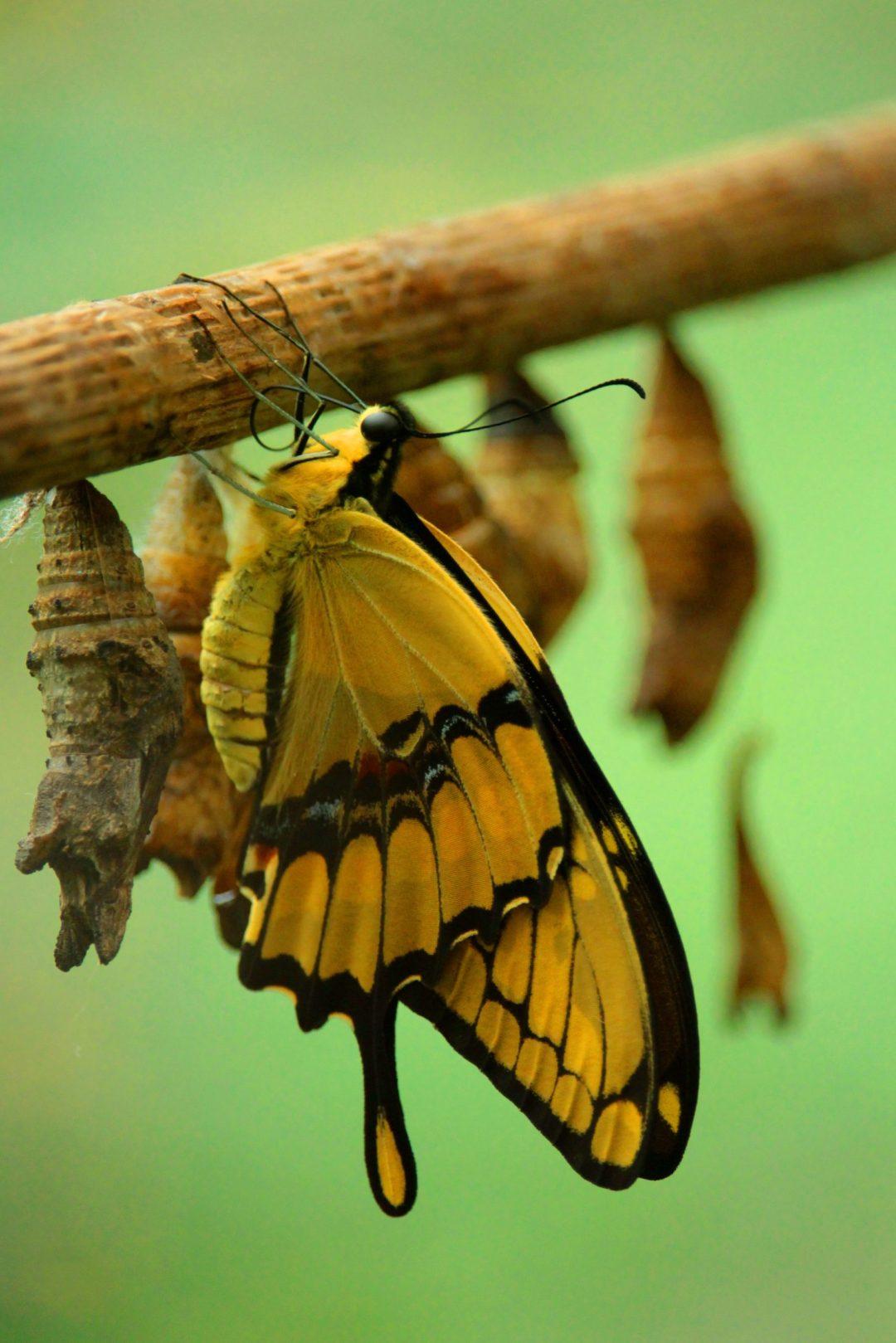 métamorphose du papillon pour symboliser la reconversion professionnelle