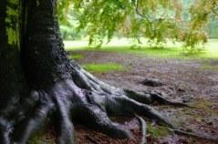14359373-oak-tree-after-rain