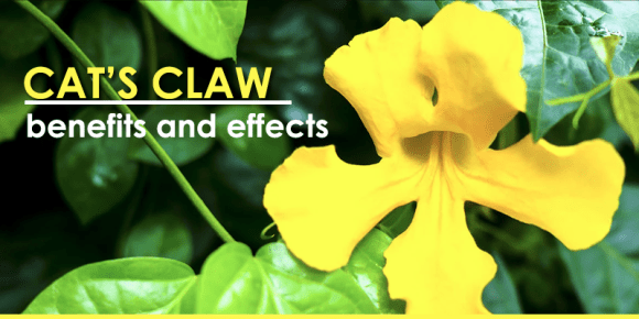 Cat's Claw reviews, Uses, Side Effects, Interactions, Dosage