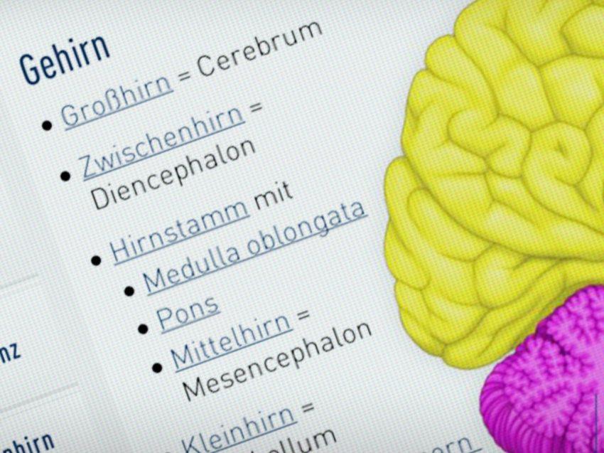 ismk-nervensystem-04