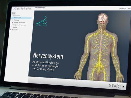 ismk-nervensystem-06