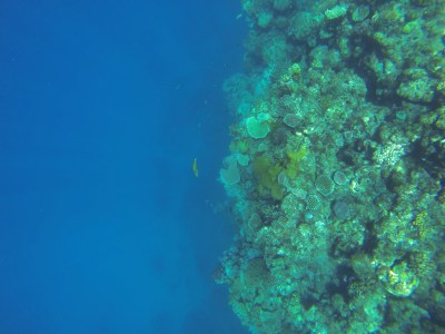 birds eye photo of coral reef