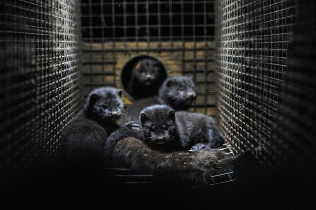 Minks by Jo-Anne McArthur on Unsplash
