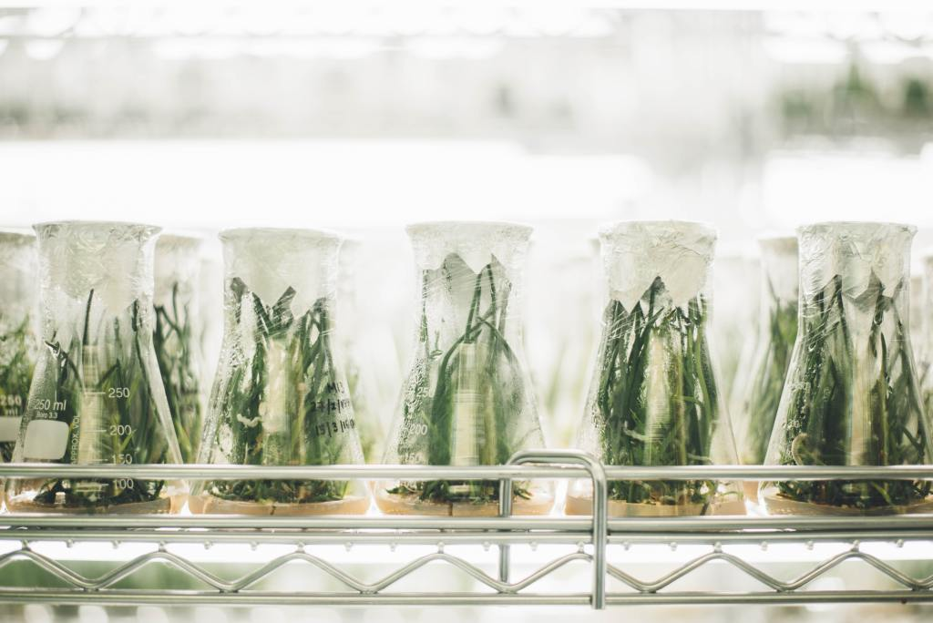 Photo depicting plants in glass bottles