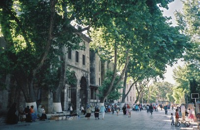 Istanbul trees shade mosque