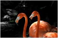 flamingos paine