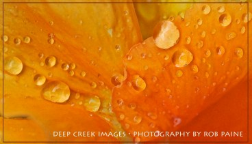 10Photo by Rob Paine/Deep Creek Images/Copyright 2015