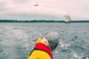 HJALM, vandflyver og fisker