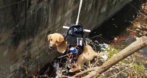 Un ingeniero consigue modificar un dron para salvar la vida de un cachorro de perro atascado en un desagüe
