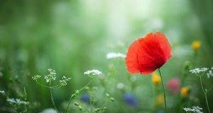 En smuk blomst symboliserer at finde sit kald med Systemisk Opstilling