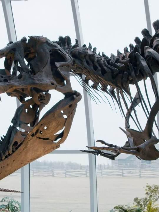 violent t-rex in a museum