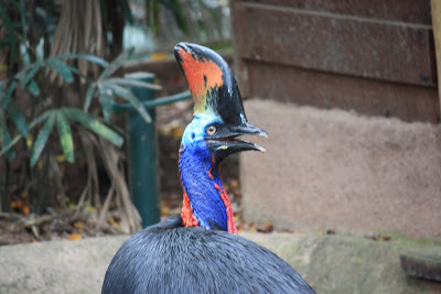 Sharp Looks of Cassowary