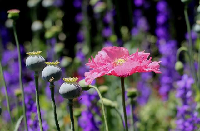 Alhambra Gardens flowers
