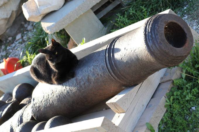 Awake or Asleep cat on a canon wordless wednesday