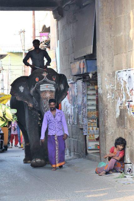 Faces of India from Srirangam