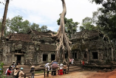 Giant trees at Cambodian Temples