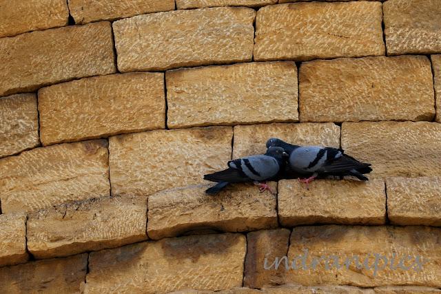 Pigeons on Jaisalmer Fort Wall