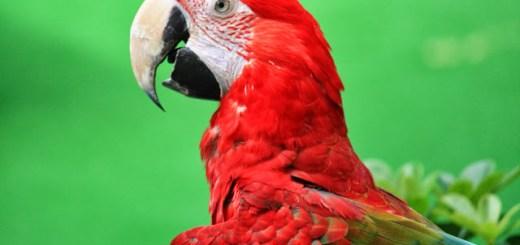 Macaw Jurong Bird Park