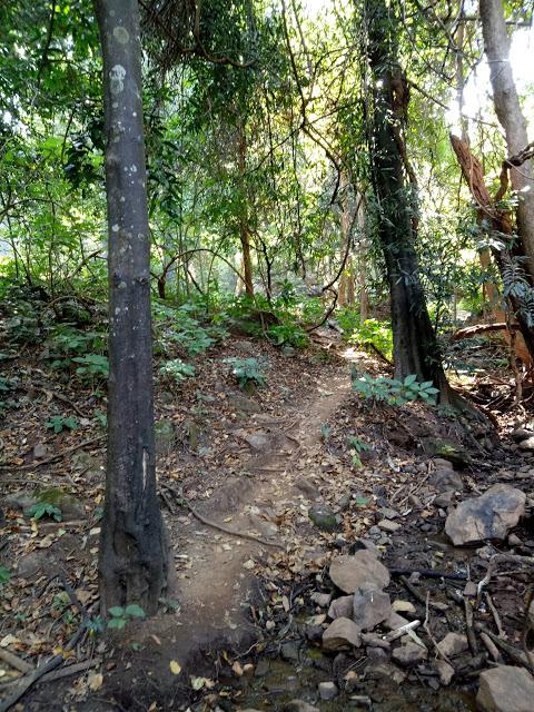 Trek through Dholkal forest