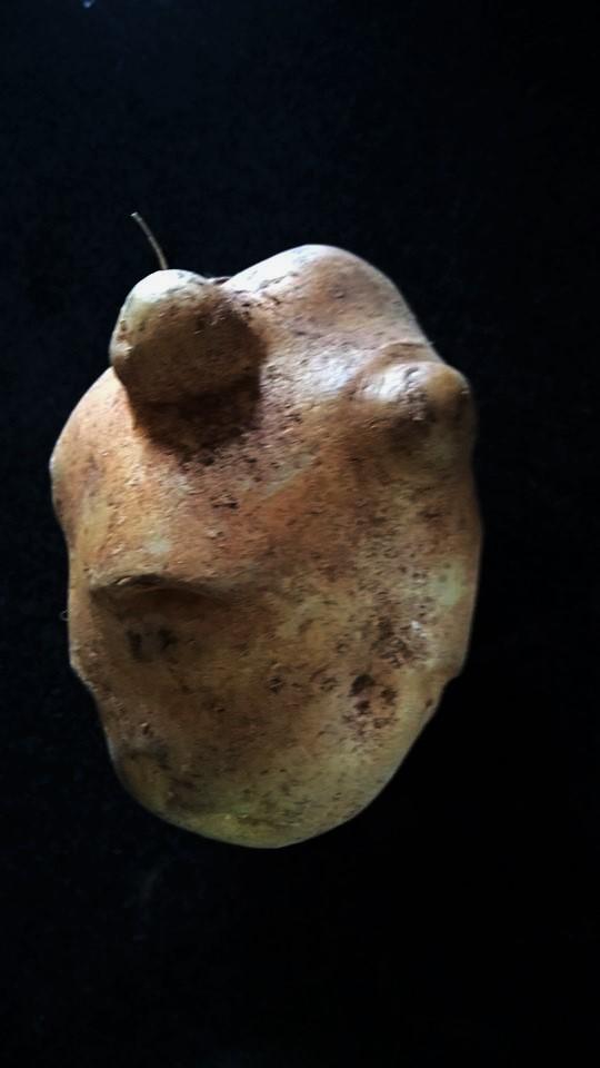 potato-wordless