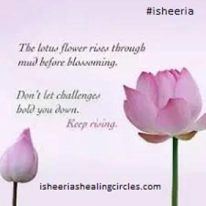 lotus meditation isheeria