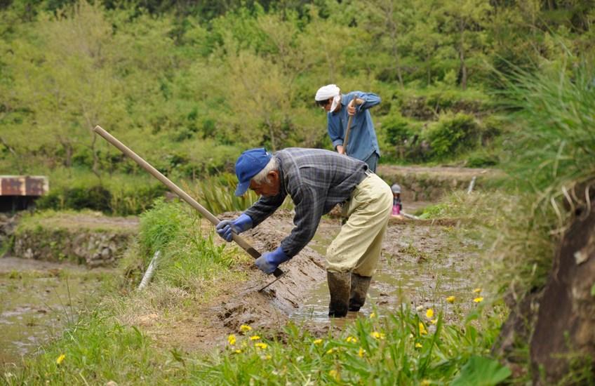 石部棚田の農作業