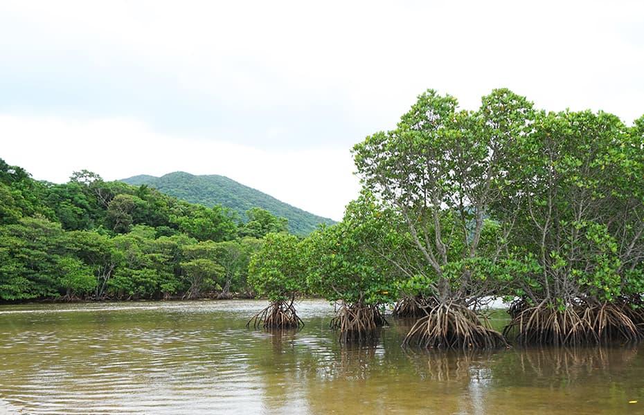ダイナミックな自然に囲まれる!石垣島のマングローブスポット