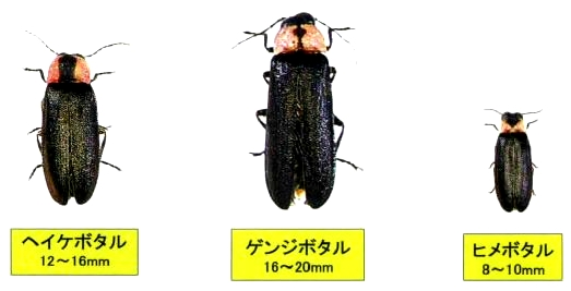 img via http://osakasayama-sc.jp/
