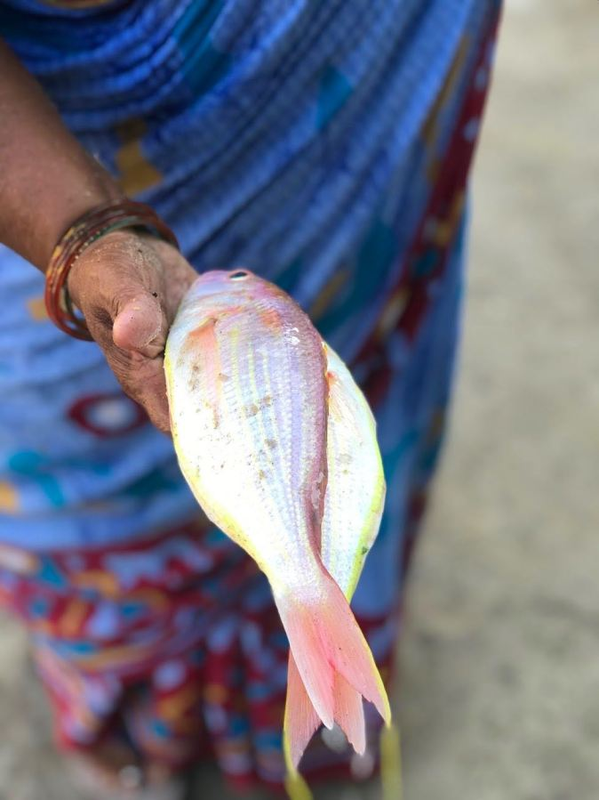 Red Snapper at Kovalam fish market in Chennai