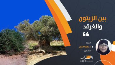 Photo of بين الزيتون والغرقد
