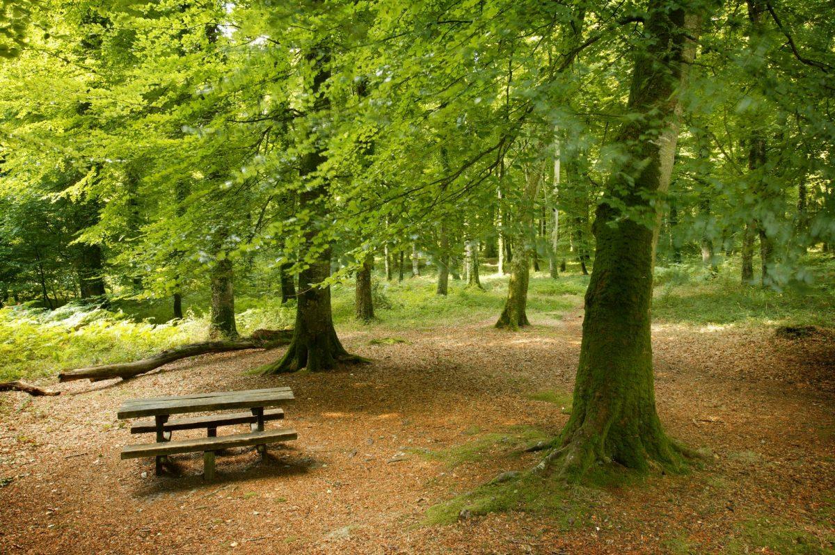 Voir la suite sur Prendre l'air en forêt de Cerisy
