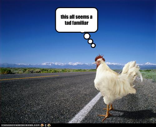 funny-pictures-chicken-crosses-road1