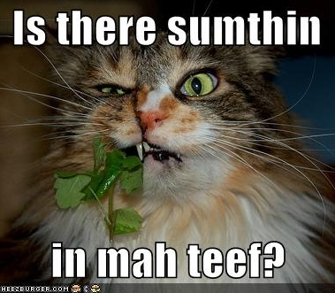 funny-pictures-something-in-cats-teeth
