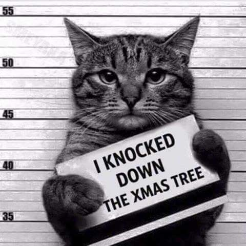 cat-knocked-down-xmas-tree