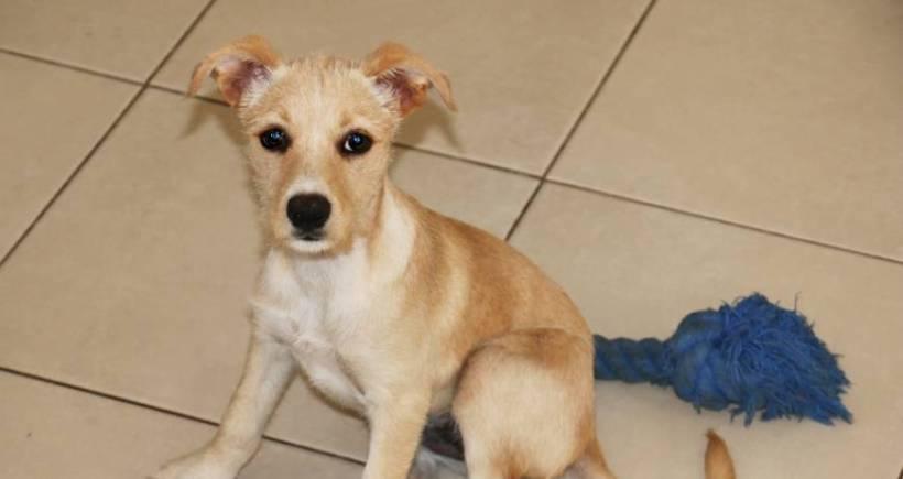 Taffy (pending adoption)