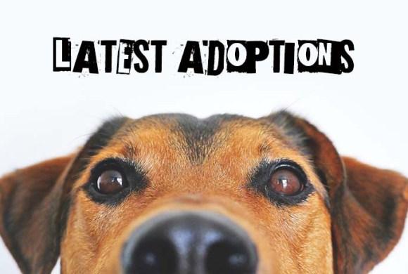 Latest Adoptions: November 2020
