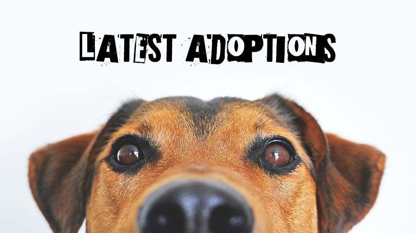 Latest Adoptions: November 2020