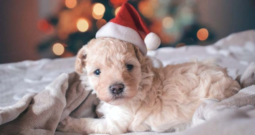 December Adoptions – Christmas stories!