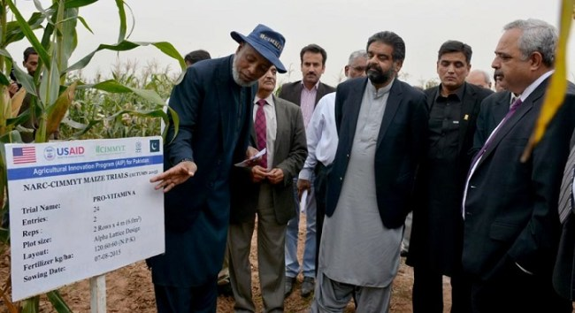 Dr. Abdur Rahman Beshir explaining benefits of new hybrid maize seeds to Minister Sikandar Hayat Khan Bosan at a maize field day visit at NARC in Islamabad