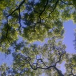 tree branches-nature