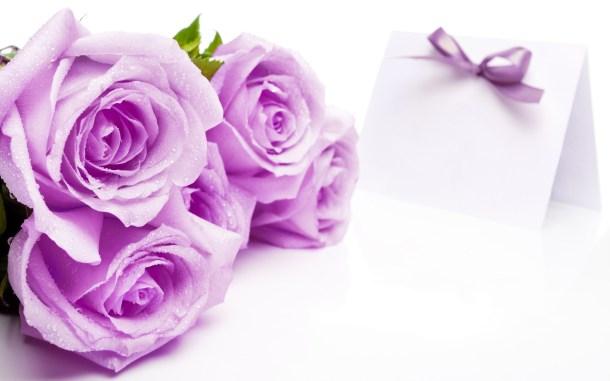 Purple Rose Flowers Wallpaper  HD