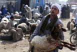 An Egyptian man carries his sheep that he bought from a livestock market ahead of Eid-al-Adha celebrations in Cairo. Nov. 4, 2011. (Mohammed Hossam - AFP/Getty Images)