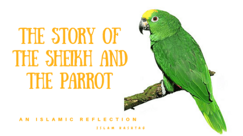 The Story of the Sheikh and the Parrot