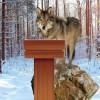 Lone Wolf Condemns Latest Terror Attack