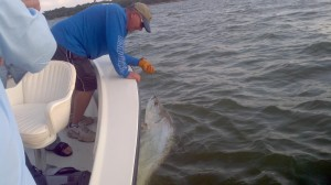backcountry tarpon fishing